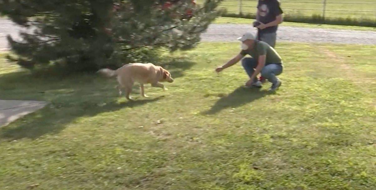 Un can recorre casi 100 kilómetros para volver a la antigua casa de su familia