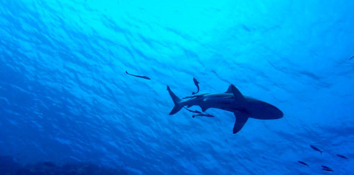 Una mujer embarazada salvó a su esposo de un ataque de tiburón