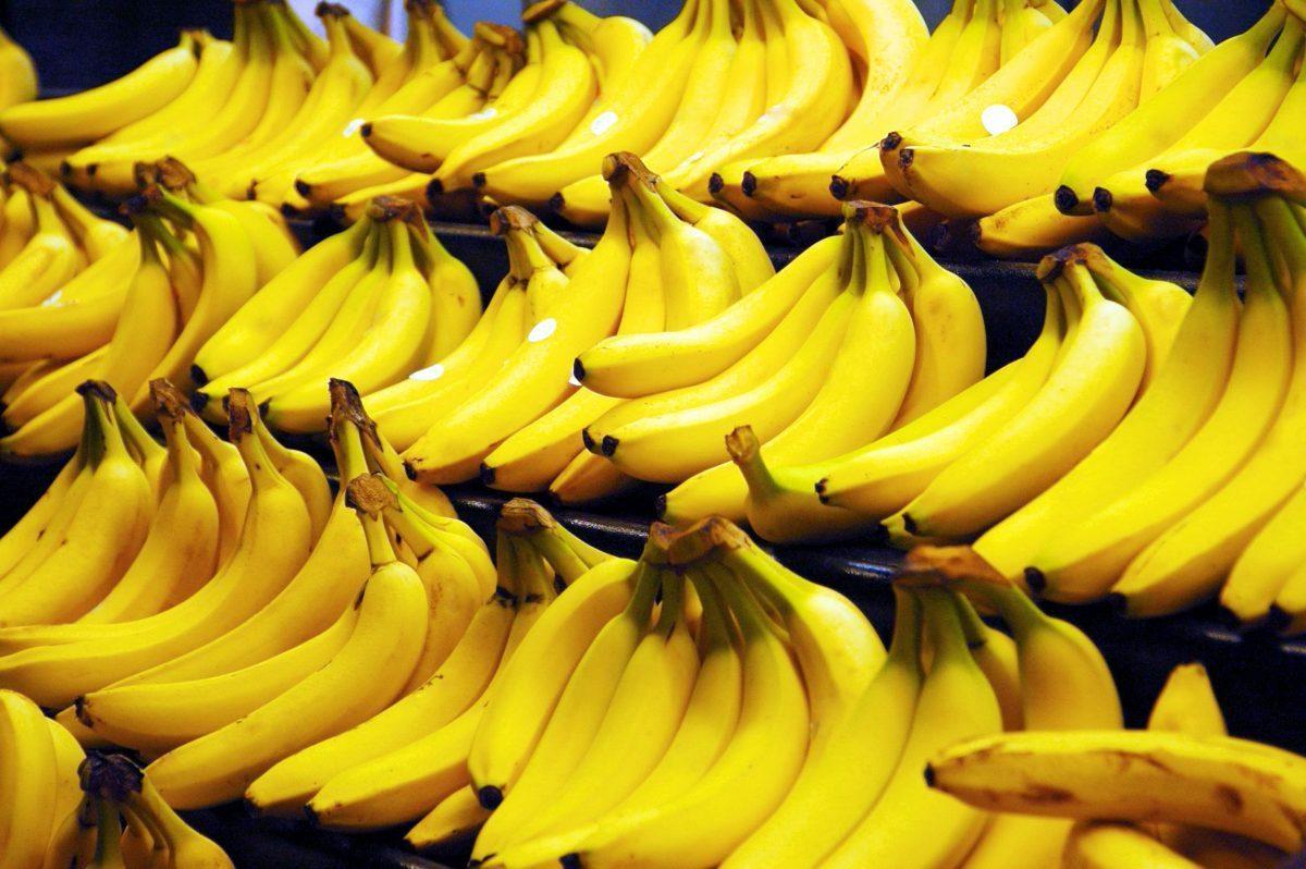 El Ministerio de Agricultura y Ganadería y la Cooperación Técnica Alemana firman convenio para fortalecer producción sostenible de banano