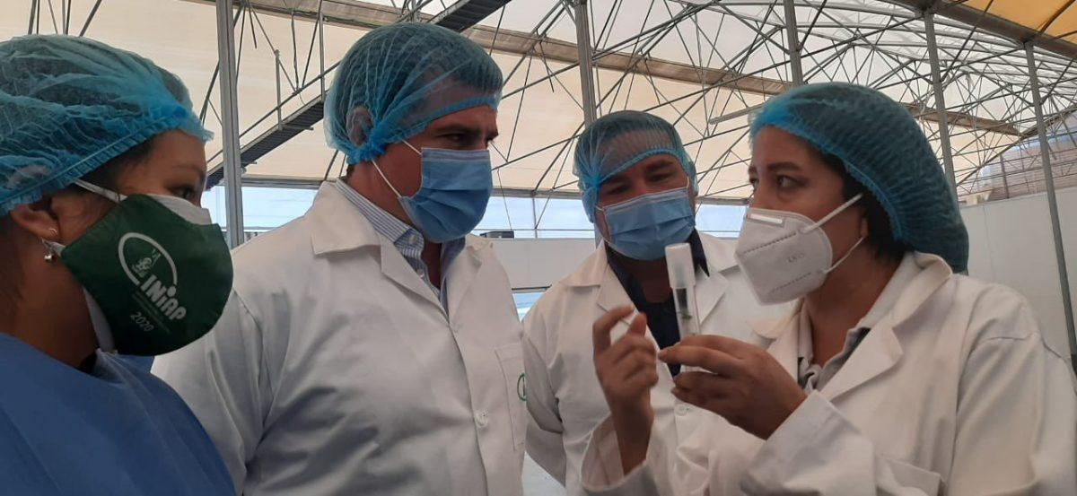 La calidad de los productos agrícolas del país se trabajan con semillas del INIAP