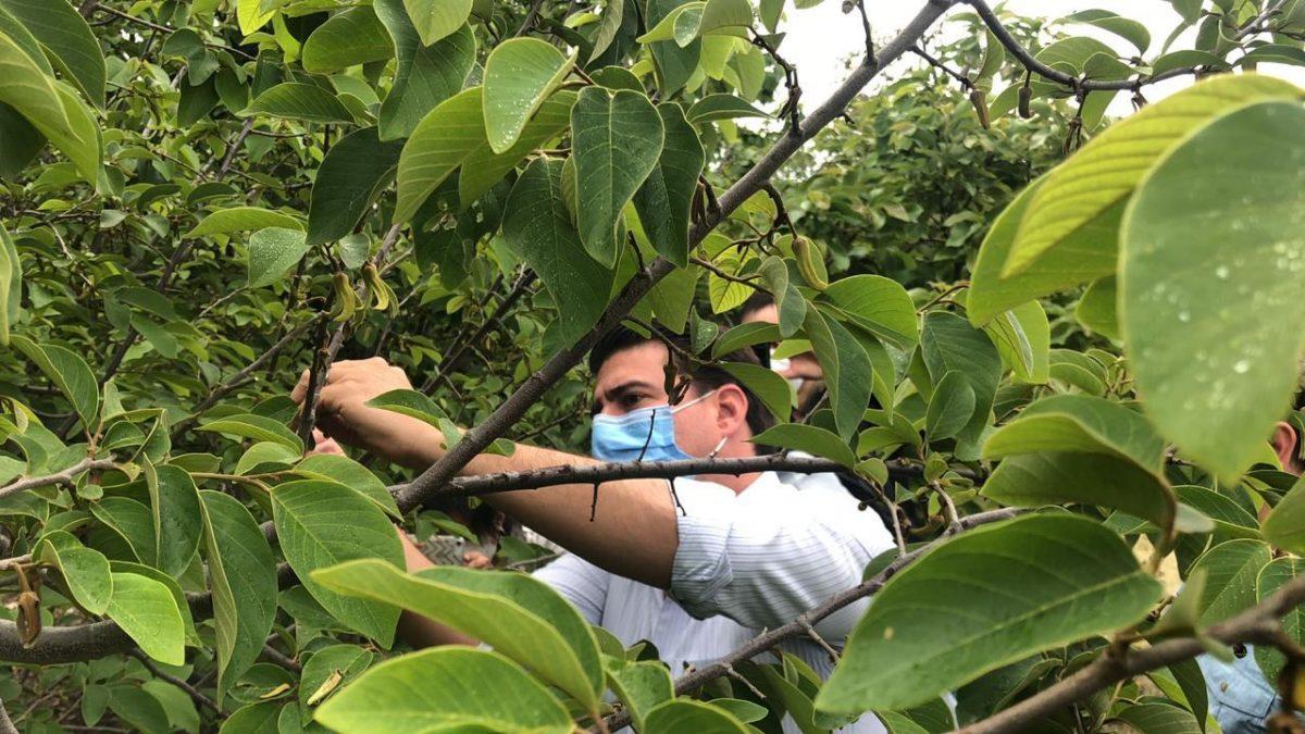 Autoridades visitan laboratorios de Agrocalidad para fortalecer el Proyecto Banano Sostenible