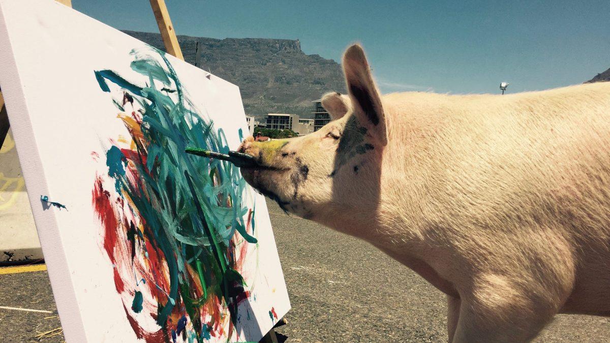 Pigcasso, la cerda artista que tiene su propia galería y logra vender sus lienzos