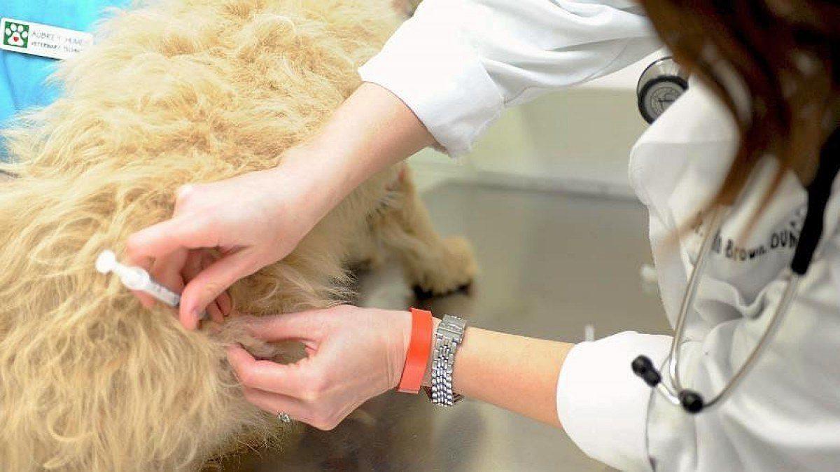 Rusia aprueba la primera vacuna contra el coronavirus para ser usada en animales