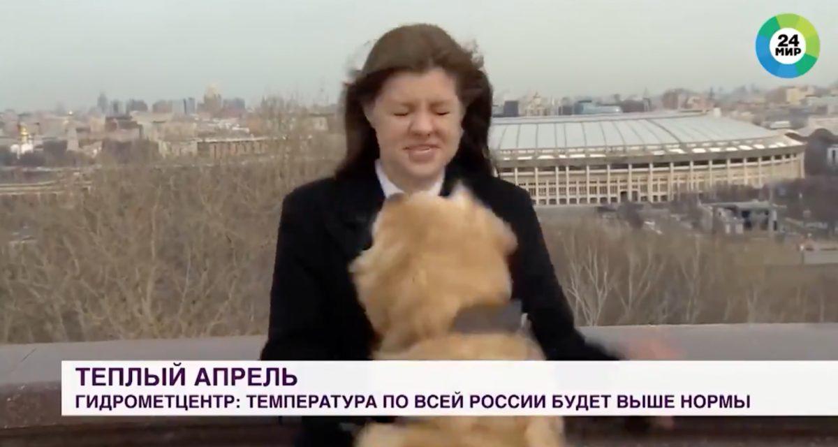 Un perro roba el micrófono de una periodista en plena transmisión