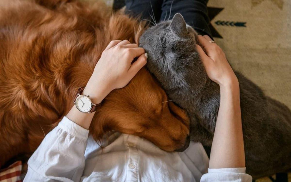 Estudio revela que acariciar a un perro reduce la ansiedad y el estrés