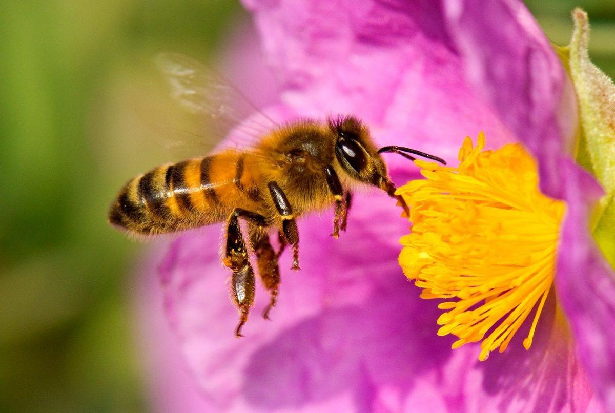 5 cosas sorprendentes sobre las abejas en el Día Mundial de las Abejas