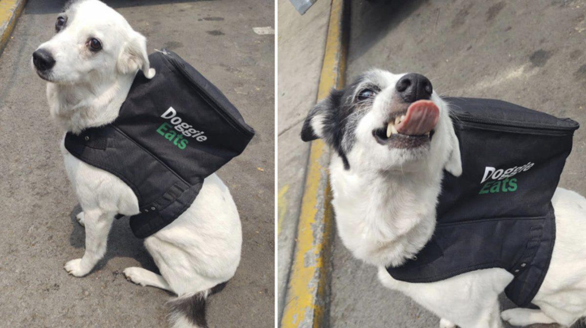 Una perra repartidora de comida a domicilio