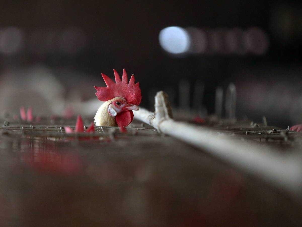 ¿Qué se sabe del primer caso en humanos de gripe aviar H10N3?