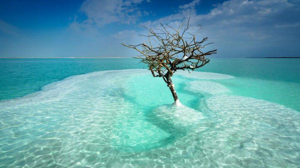 """El increíble """"árbol de la vida"""" que crece en medio del Mar Muerto"""