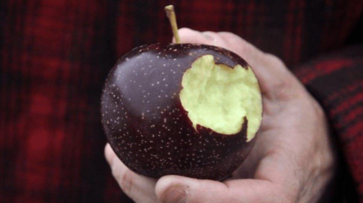¿Qué es la rara manzana negra y por qué es una de las más caras del mundo?