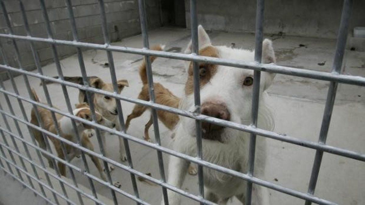 Asesinan a varios perros para evitar propagación del covid-19 en Australia