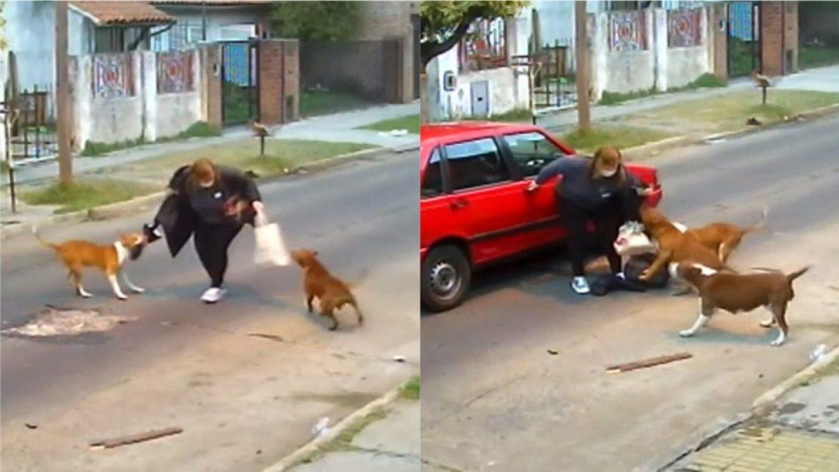 VIDEO: Tres perros atacaron a una mujer en Argentina