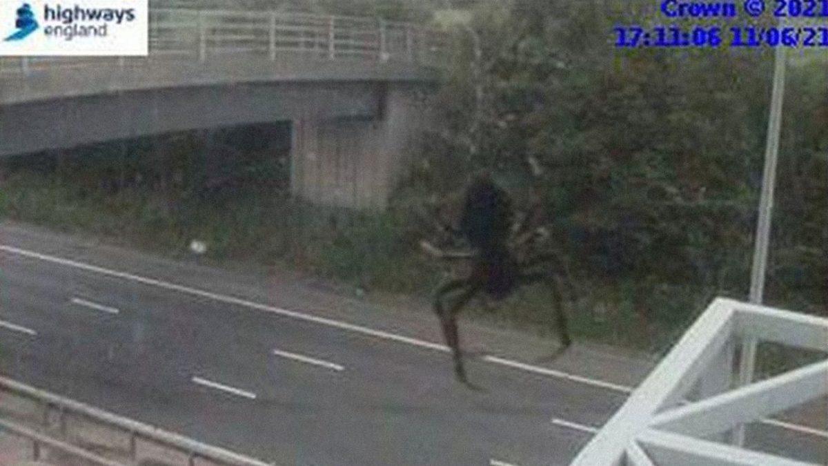 FOTO: Una araña 'gigante' se cuela en la grabación de una cámara de tráfico y provoca un efecto aterrador