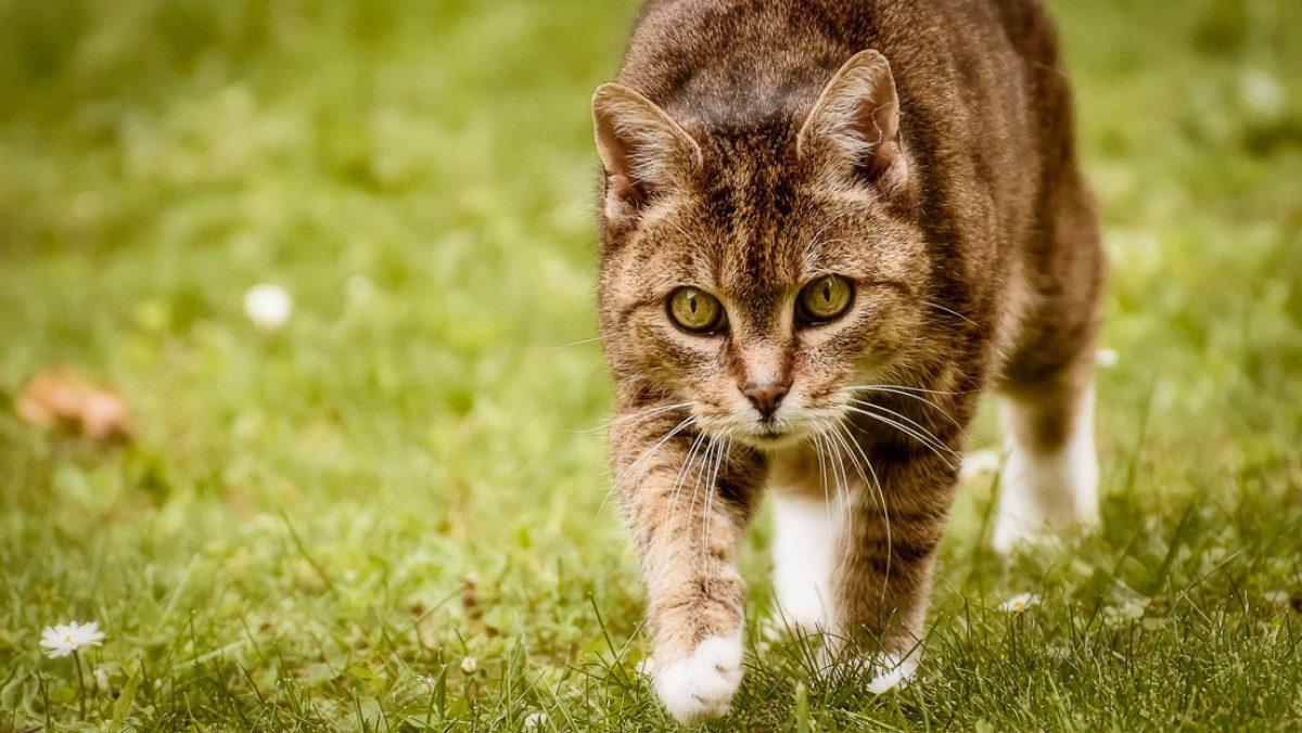 Un gato muerde a su dueña y muere por un extraño virus hallado en un murciélago