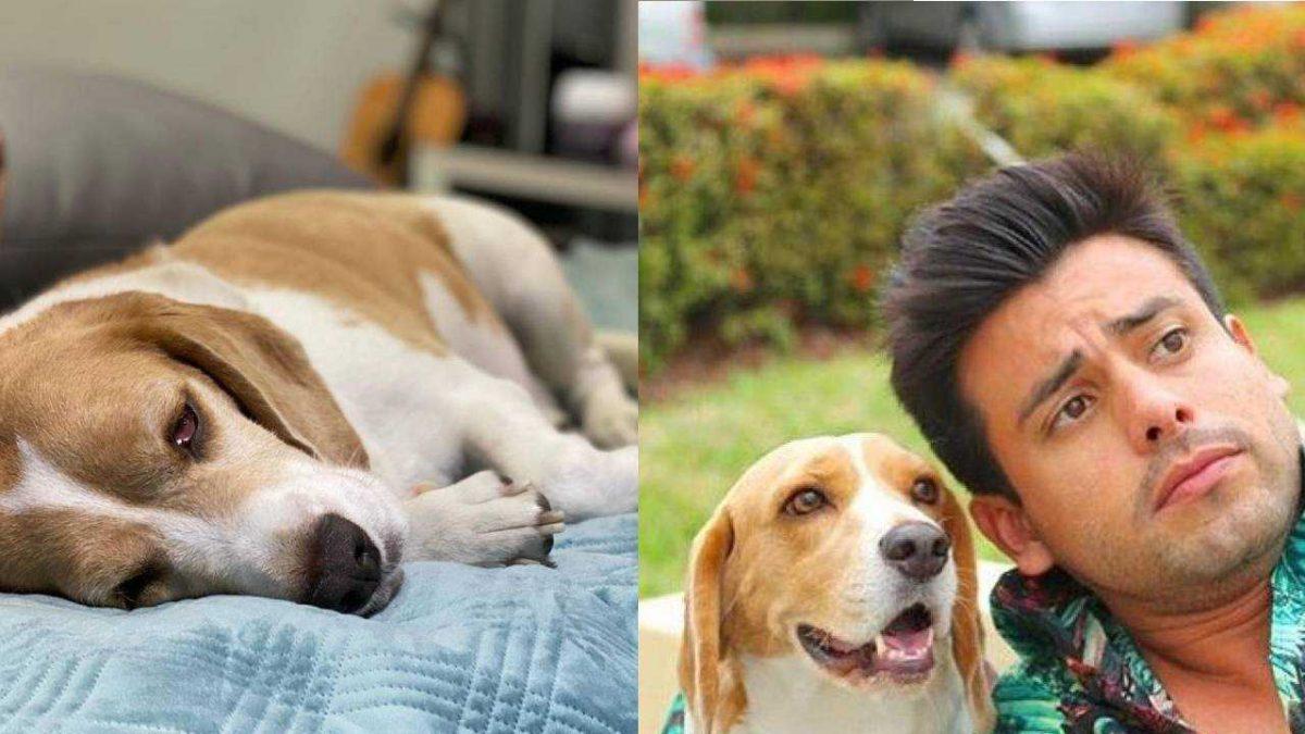 Jagger, la mascota de Efraín Ruales que no encontrará a su dueño