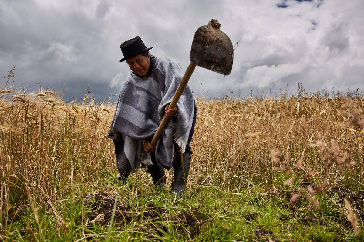 Nuestra Siembra incrementa la producción agrícola del país con sus nuevas presentaciones