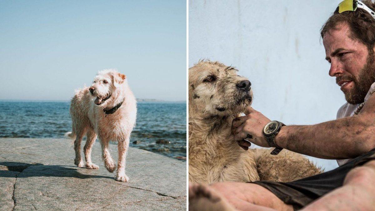 Falleció Arthur: el perro de Ecuador que se unió a una competencia mundial de aventura