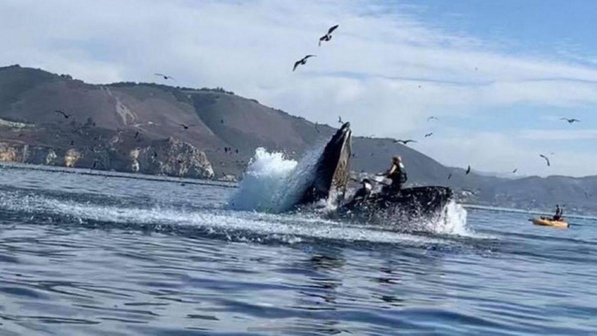 Video muestra cómo una ballena casi se traga a dos mujeres