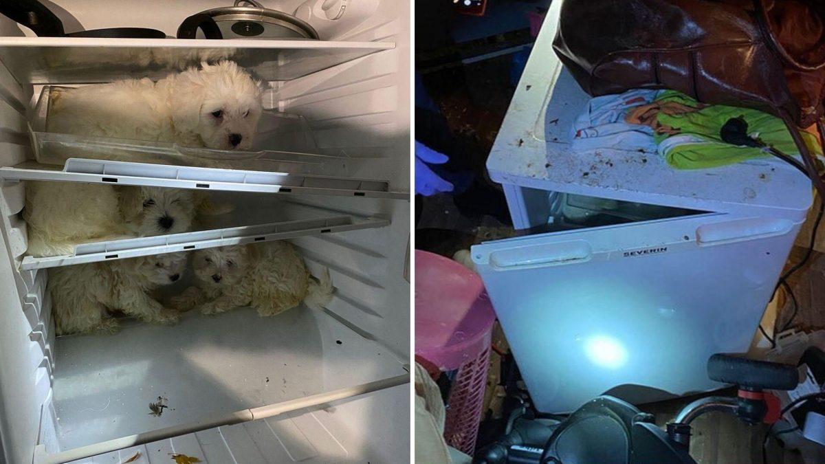 Rescatan a cachorros de un refrigerador: los escondían para venderlos