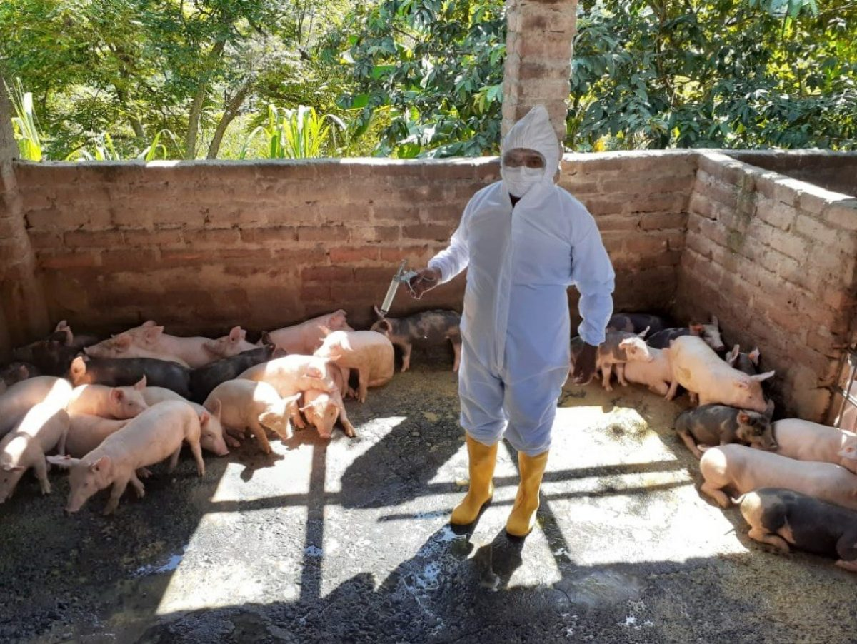 Productores y autoridades del Ministerio de Agricultura y Ganadería (MAG), analizan alternativas para exportar carne de cerdo
