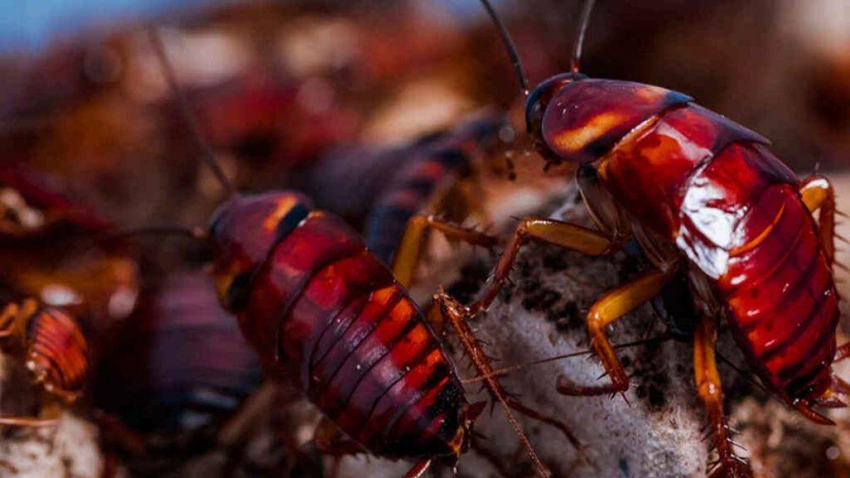 VIDEO: Atacan un restaurante arrojando más de 1.000 cucarachas en su interior