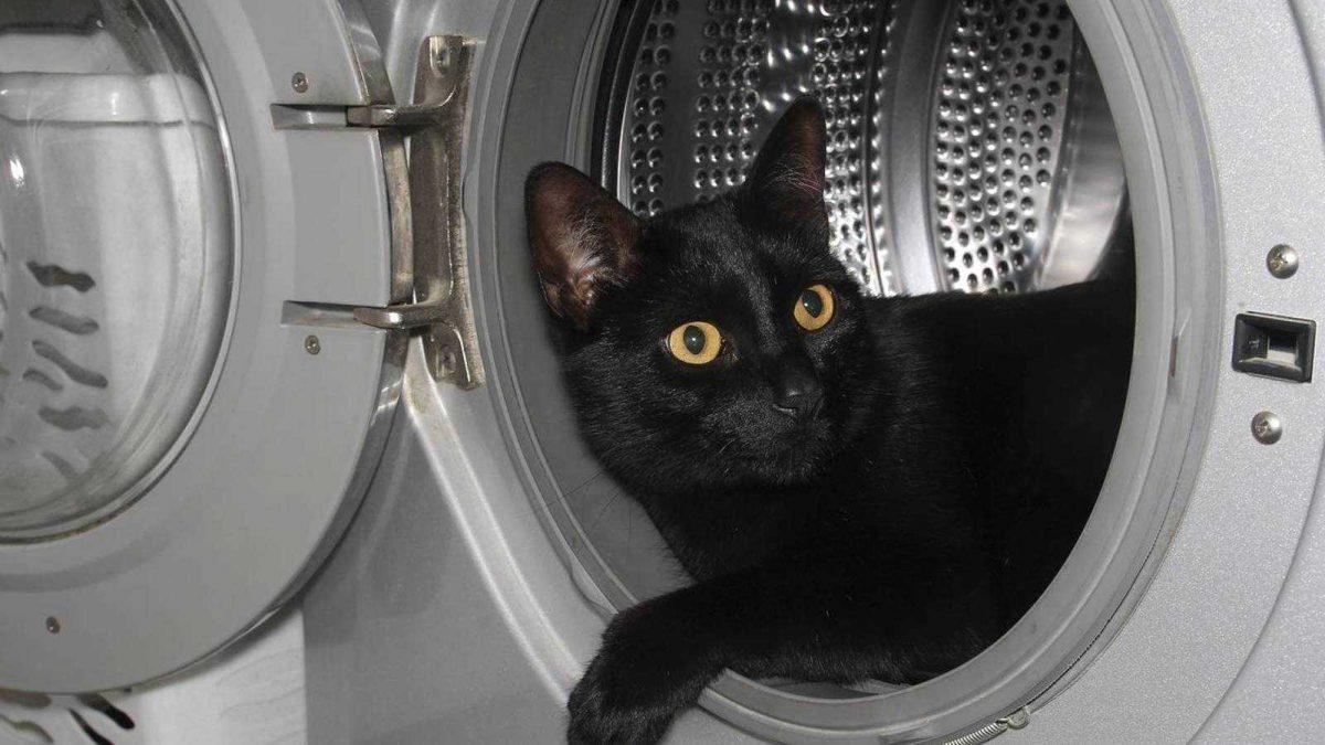 Un gato sobrevive tras pasar 12 minutos dentro de una lavadora en marcha