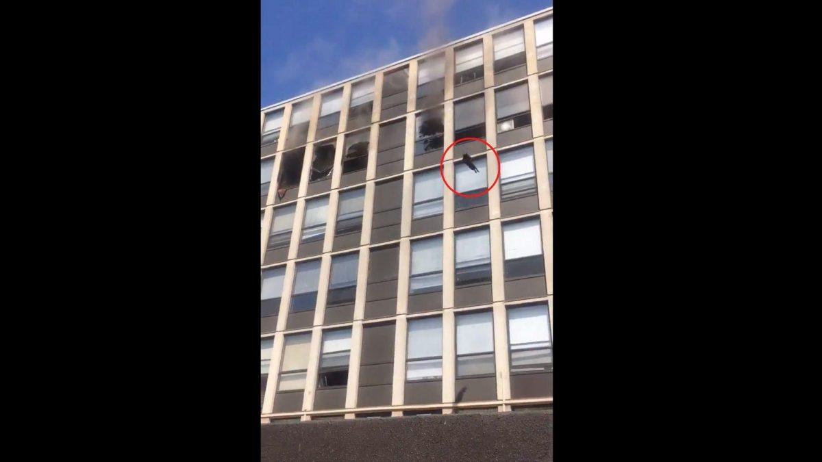 Impresionante salto de un gato desde un edificio en llamas