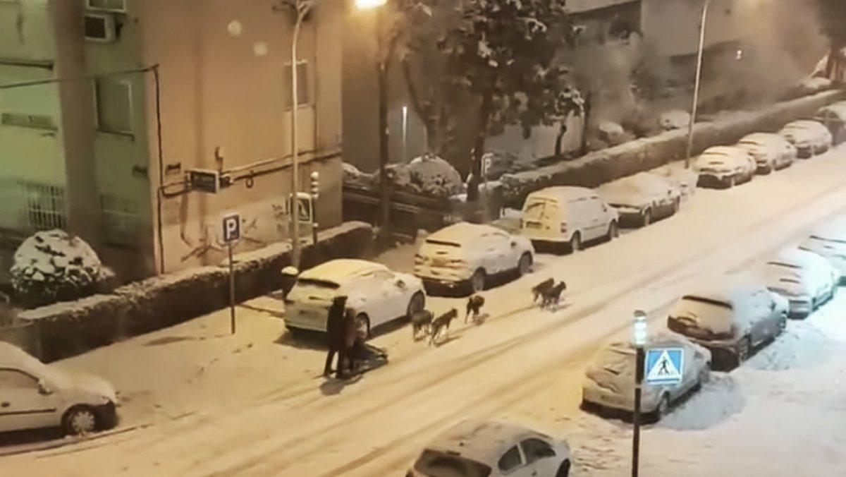 VIDEO: Un hombre se pasea por calles de España en un trineo tirado por perros