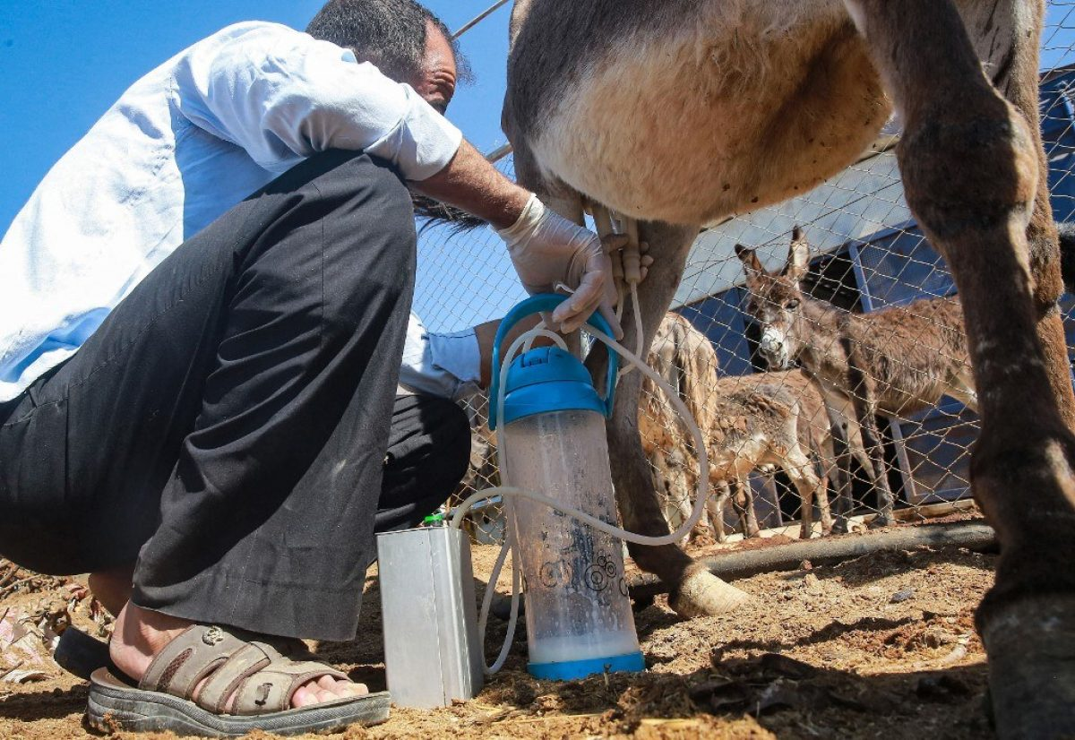 Un jabón fabricado con leche de burra crea furor en Jordania