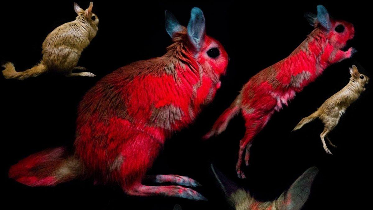 Científicos descubren que este animal brilla bajo la luz ultravioleta