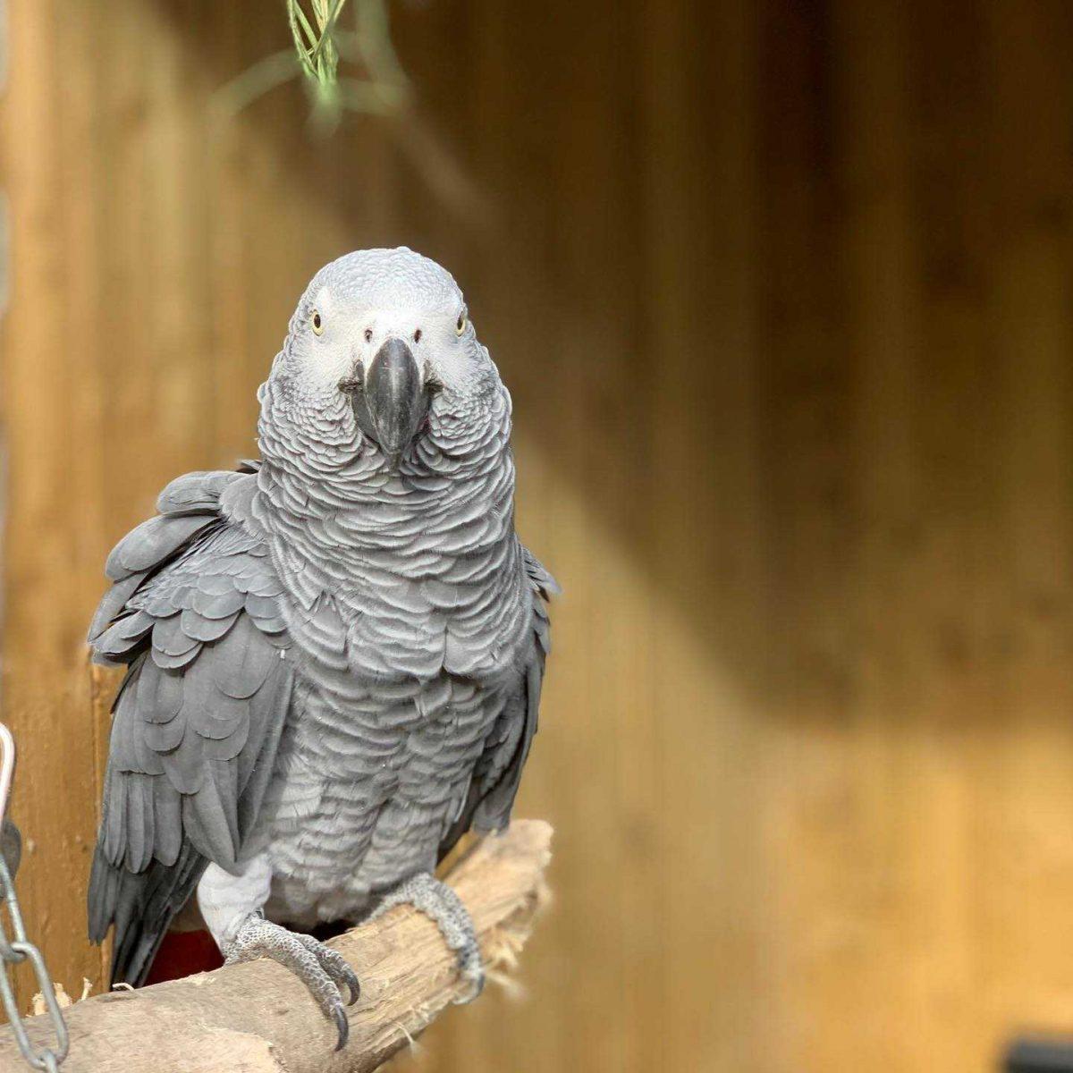 Aislados por groseros: cinco loros en un zoológico fueron apartados para que no insulten a los visitantes