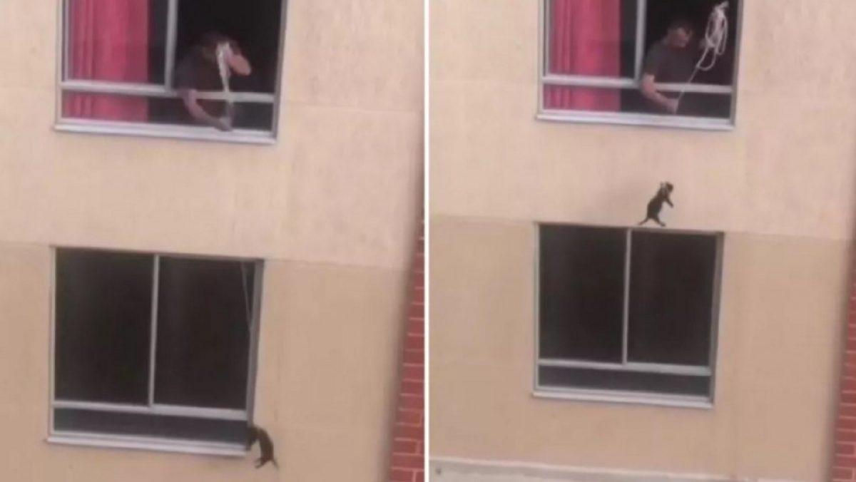 """Un hombre que amarró del cuello a su perro para """"pasearlo"""" desde segundo piso de un edificio"""