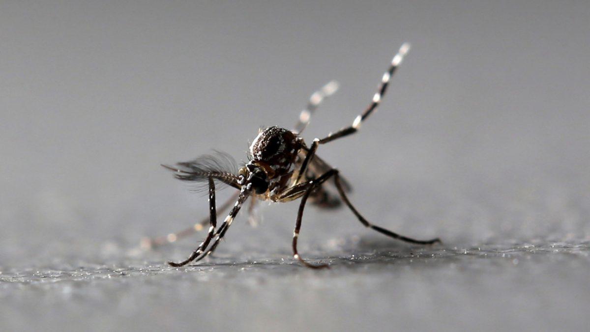 Detectan mosquitos portadores de un virus capaz de paralizar a los humanos   TC Televisión