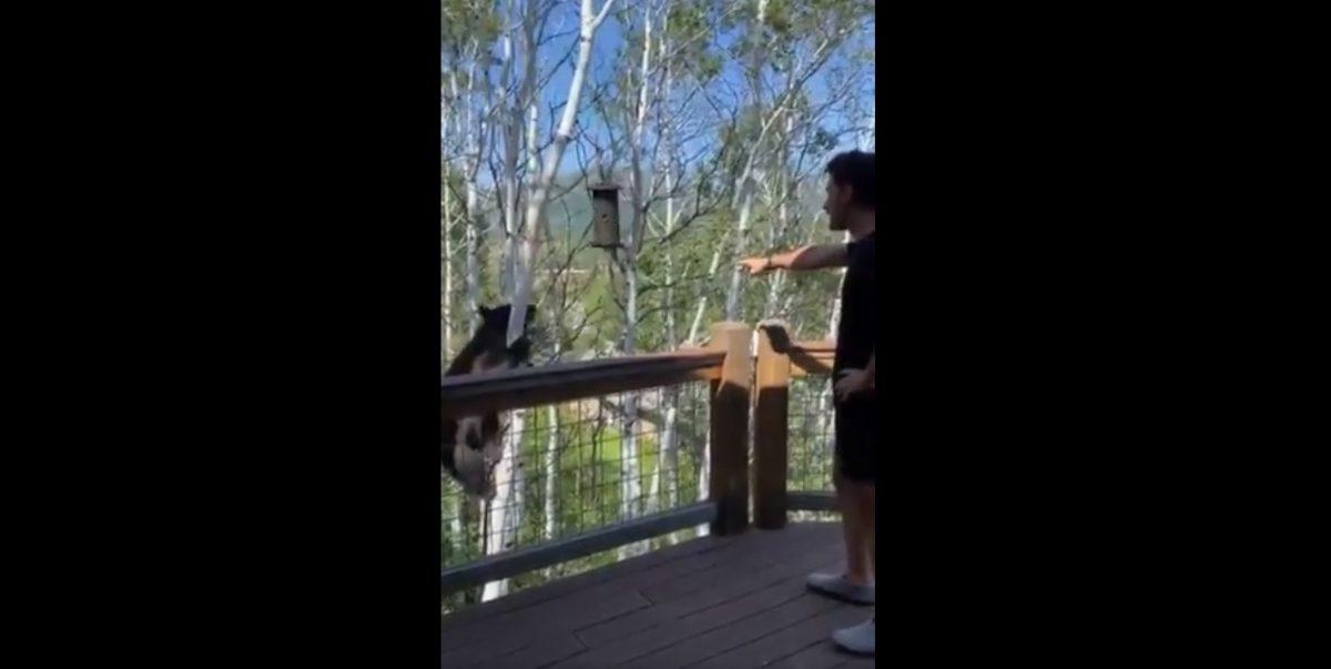 VIDEO: Un hombre reta un oso que intenta robar comida de pájaros