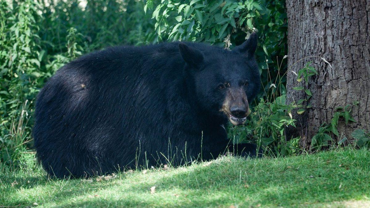 Multan y condenan a una mujer por haber dejado entrar a un oso salvaje a su casa