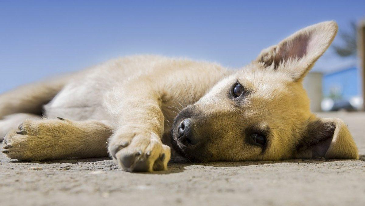 FOTOS: Encuentran un cachorro callejero dormido en un pesebre navideño y hacen esto con él