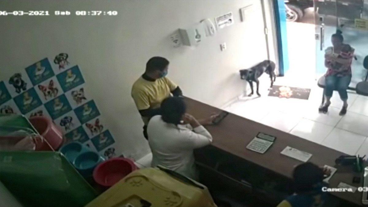 VIDEO | Perro callejero entra a veterinaria con su pata lesionada