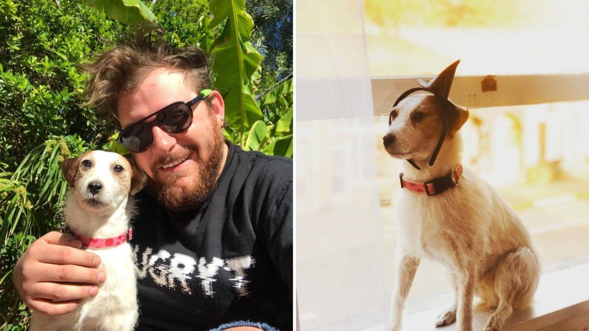 Viaja con su mascota muerta y lo documenta en redes sociales