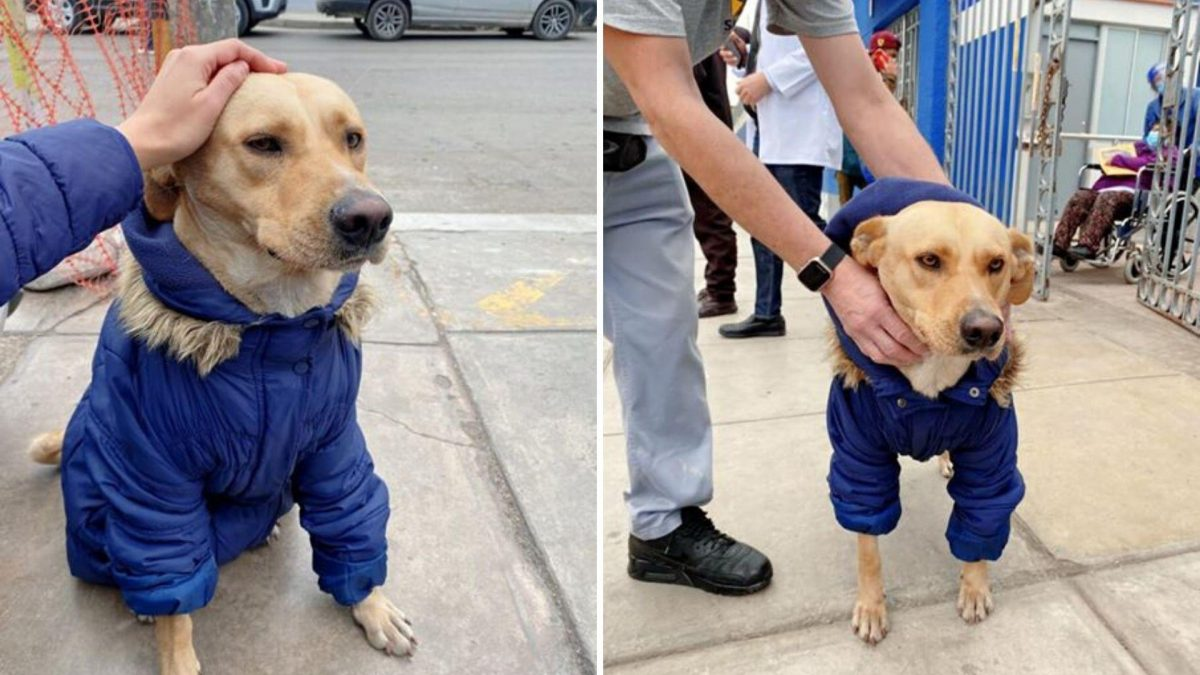 La historia de un perro que espera fuera de un hospital a su dueño diagnosticado con coronavirus