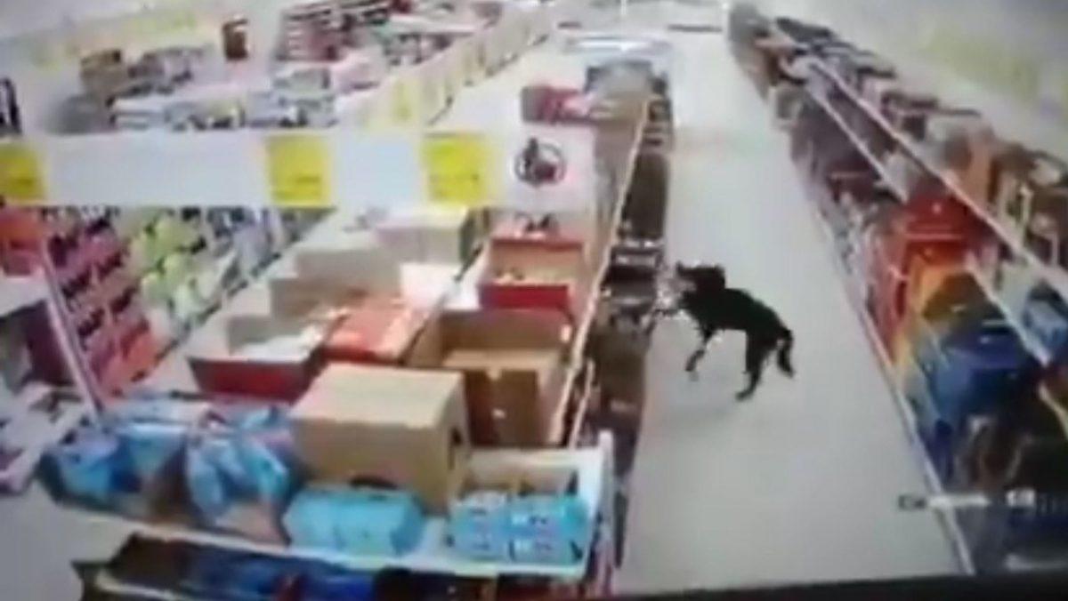 VIDEO: Un perro que 'roba' comida y se desinfecta las patas antes de huir con el botín se viraliza