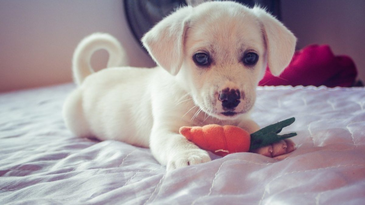 ¿Es recomendable darle comida casera a mi perro?: Mira lo que dicen los especialistas