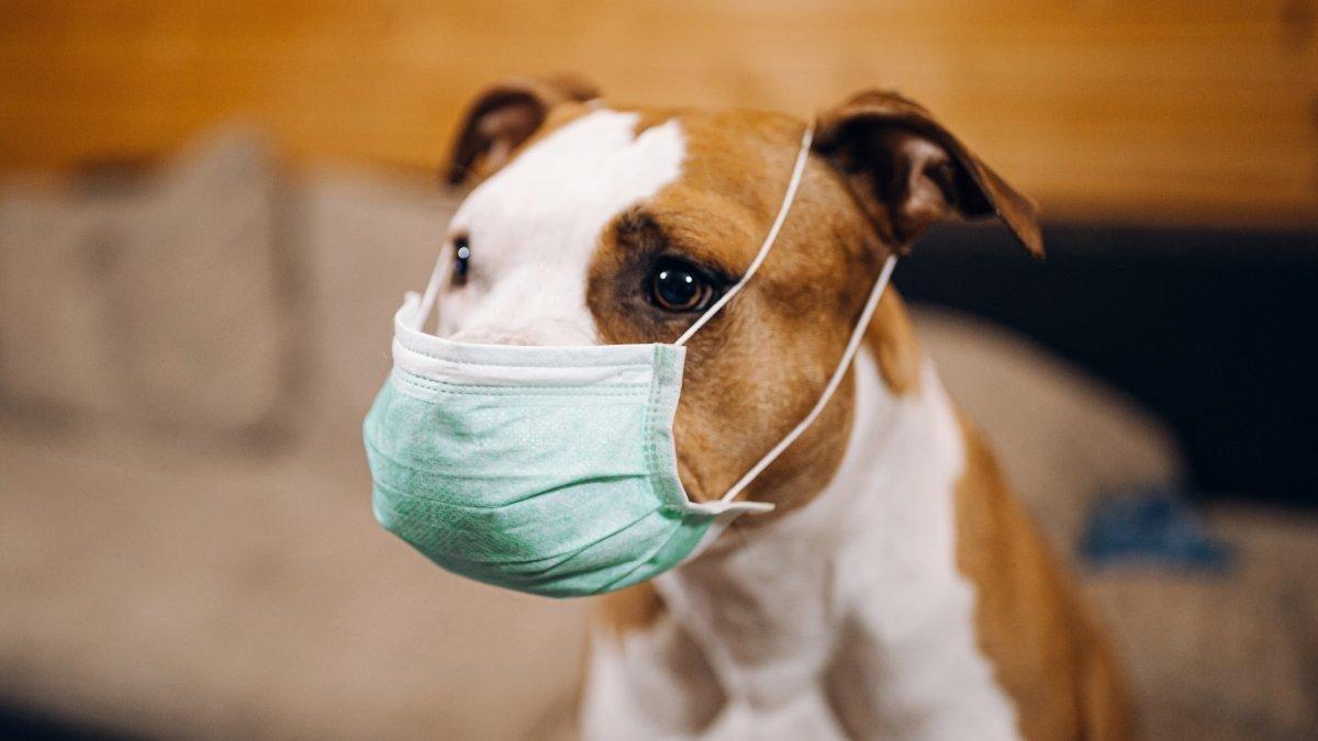 Corea del Sur hará pruebas del coronavirus a gatos y perros