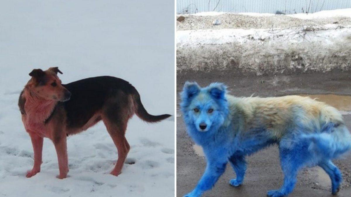 FOTO: Aparece un perro rosado en la misma ciudad rusa donde fueron vistos canes azules