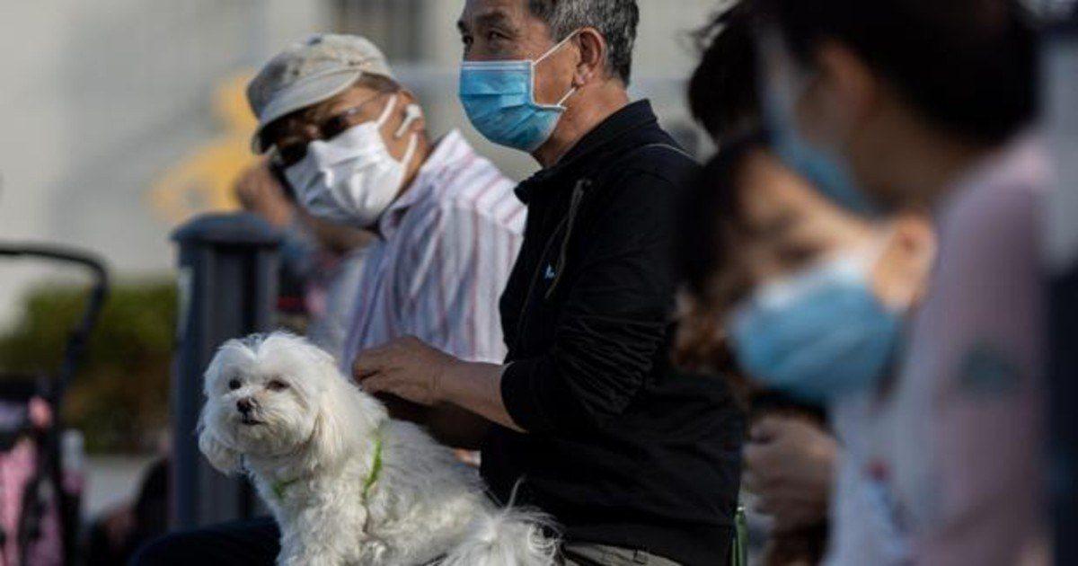 Perros entrenados pueden detectar casos de covid con alta precisión