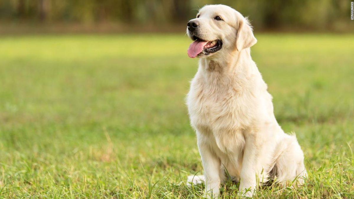 Amistad milenaria: Perros acompañaron a primeros humanos en su llegada a América del Norte