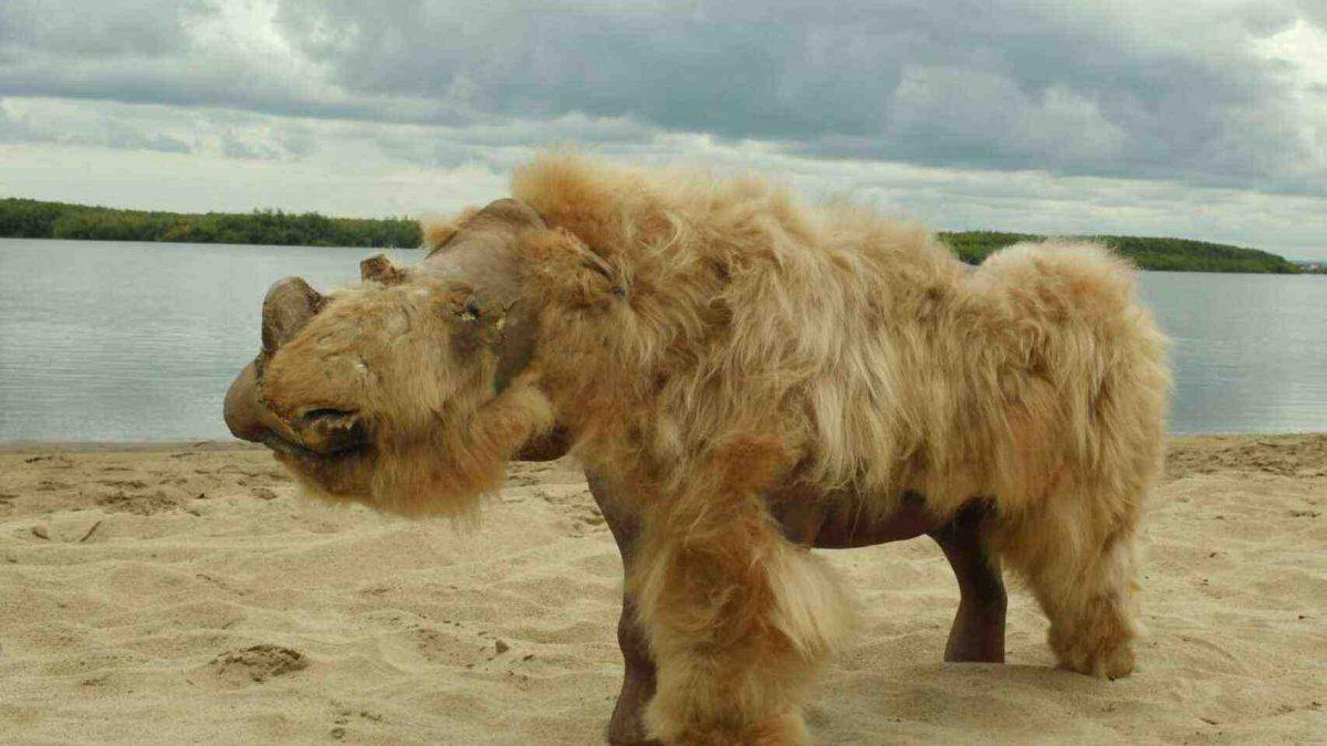 FOTOS | Descubren el cuerpo de un rinoceronte lanudo enterrado durante 50 mil años