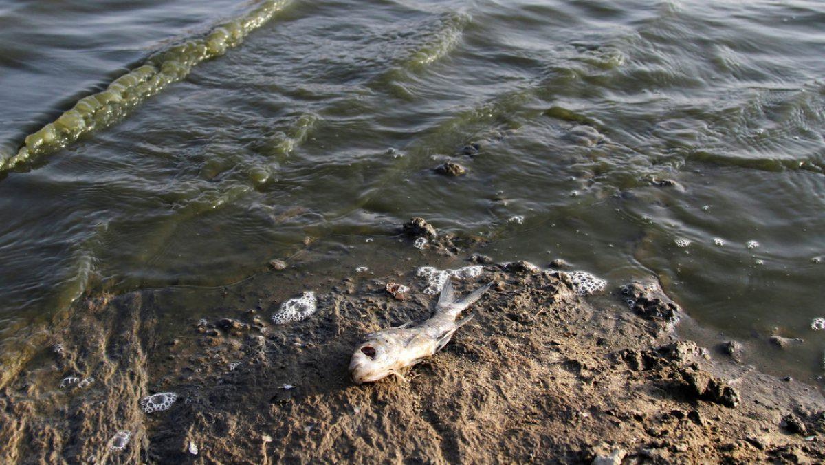 Aparecen cientos de peces muertos en las orillas del un río en EE.UU.