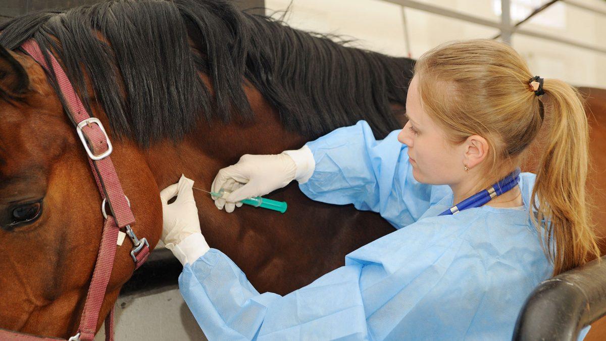 Argentina aprobó el suero de caballo como tratamiento para el Covid-19