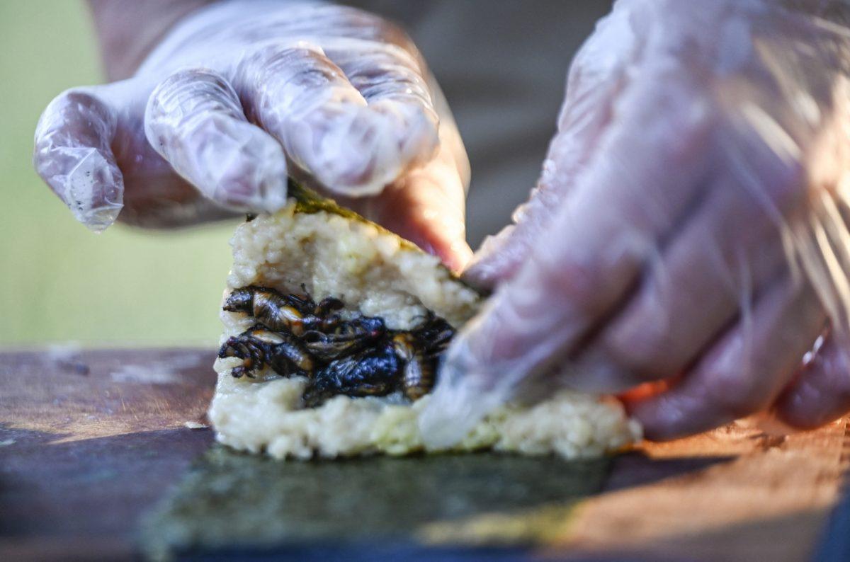 Sushi de cigarra, el crujiente manjar de un chef en EE.UU.