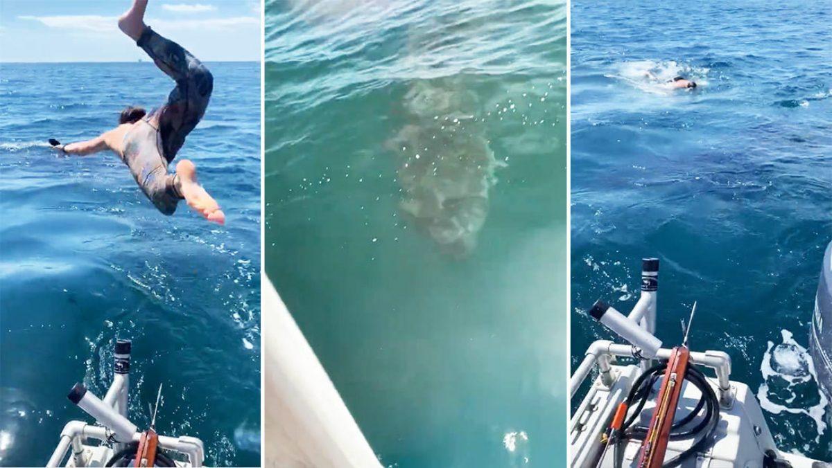 """VIDEO: Un joven se lanza a nadar con un inofensivo 'tiburón peregrino' y al poco descubre que fue """"una mala idea"""""""